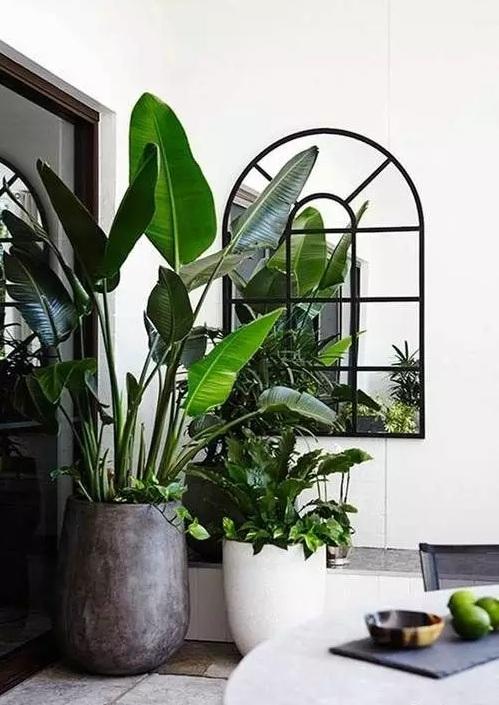 同样的,橡胶树和龟背竹对于温度和水分也很敏感,一旦为它们找到了好